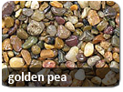 golden pea
